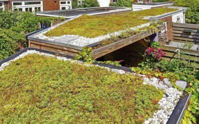 Groen dak en regenton actie Angerenstein